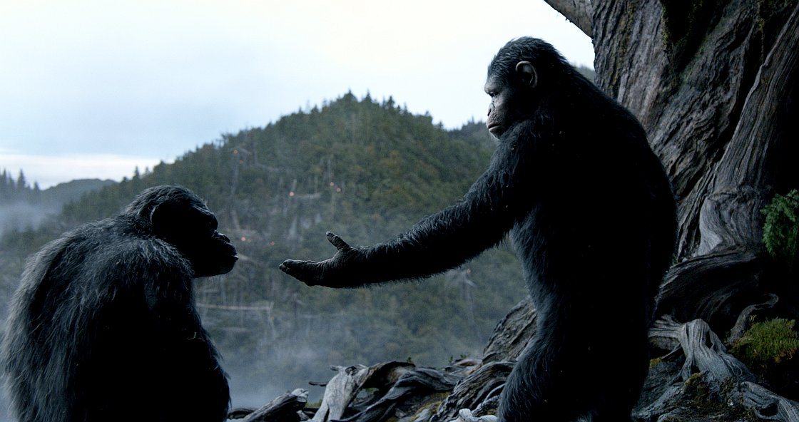 """Caesar (Andy Serkis) makes peace with Koba (Toby Kebbell) in a scene from the motion picture """"Dawn of the Planet of the Apes."""" CREDIT: WETA/20th Century Fox"""
