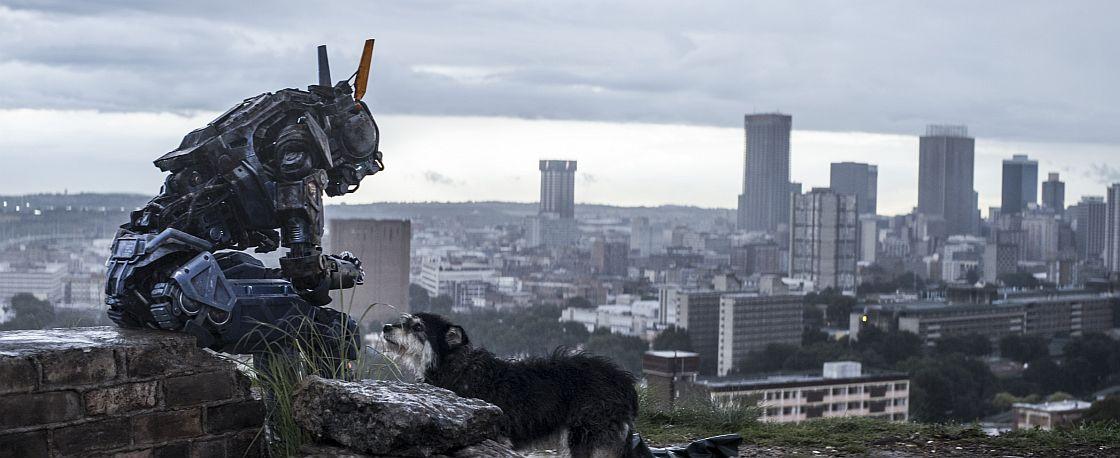 chappie-es-a-kutya